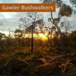 Gawler Bushwalkers