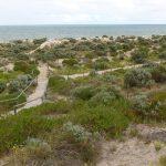 Tennyson Dunes Native Plant Trail