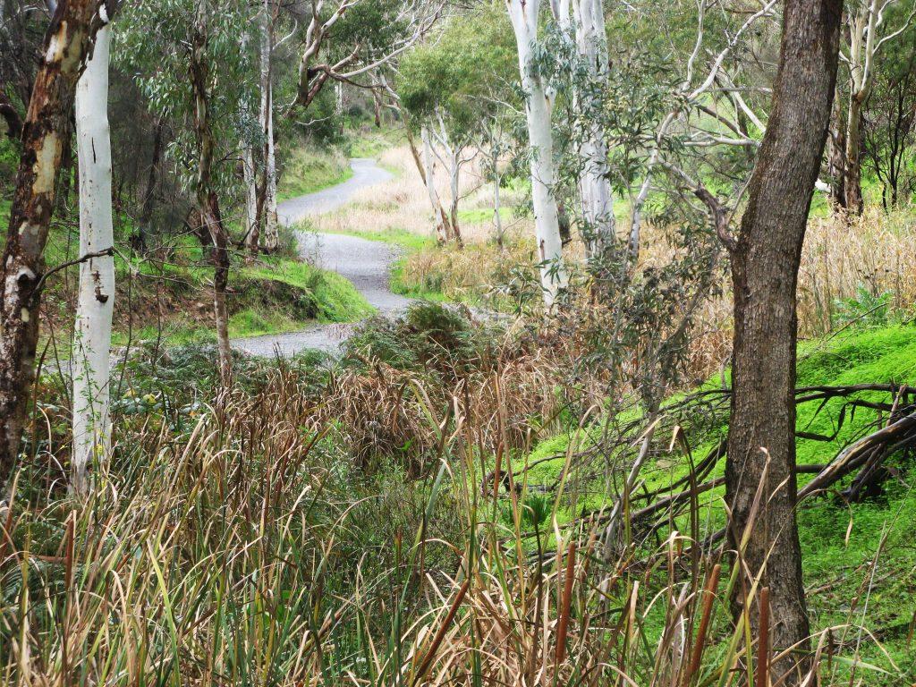 Yellowtail Loop (Anstey Hill Loop)