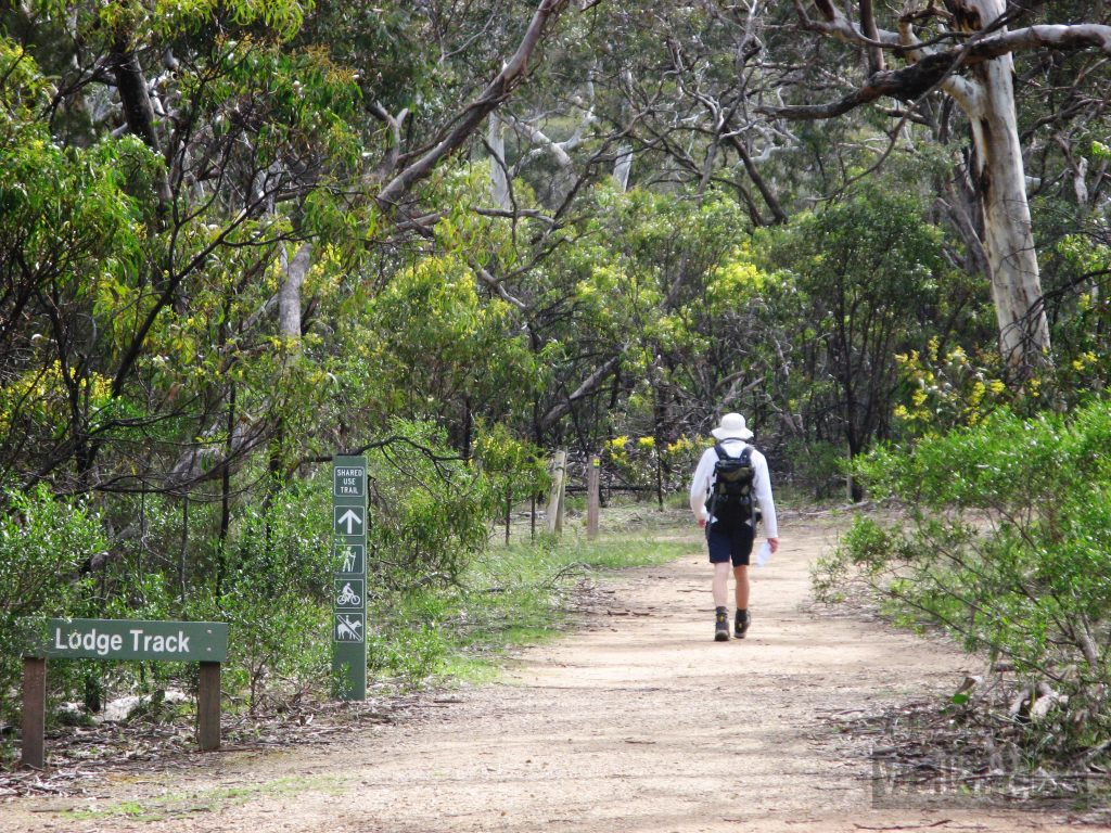 04-Walking-the-Microcarpa-Hike-Belair-National-Park-1024x768.jpg
