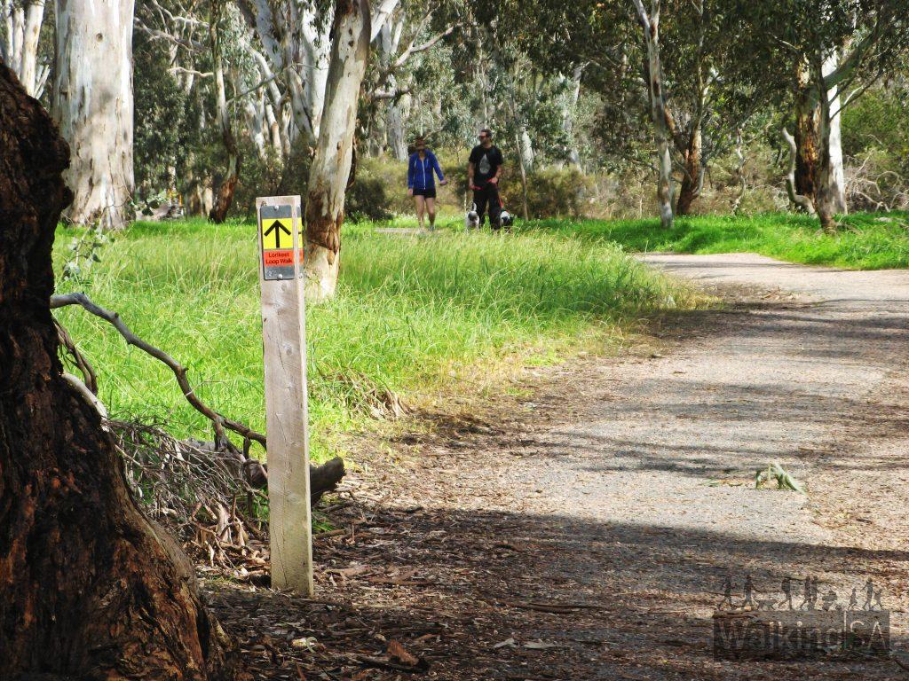 06-Hike-with-your-dog-on-the-Lorikeet-Loop-Walk-Belair-National-Park-1024x768.jpg