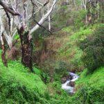 Chambers Hike