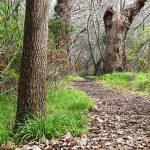 Heritage Tree Walk, Belair National Park