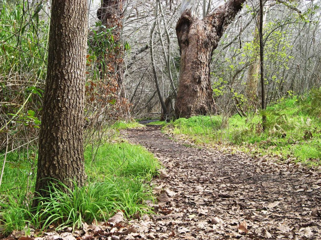 Heritage Tree Walk, Belair National Park