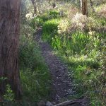Main Valley and Rockdale Hill Hike, Horsnell Gully Conservation Park