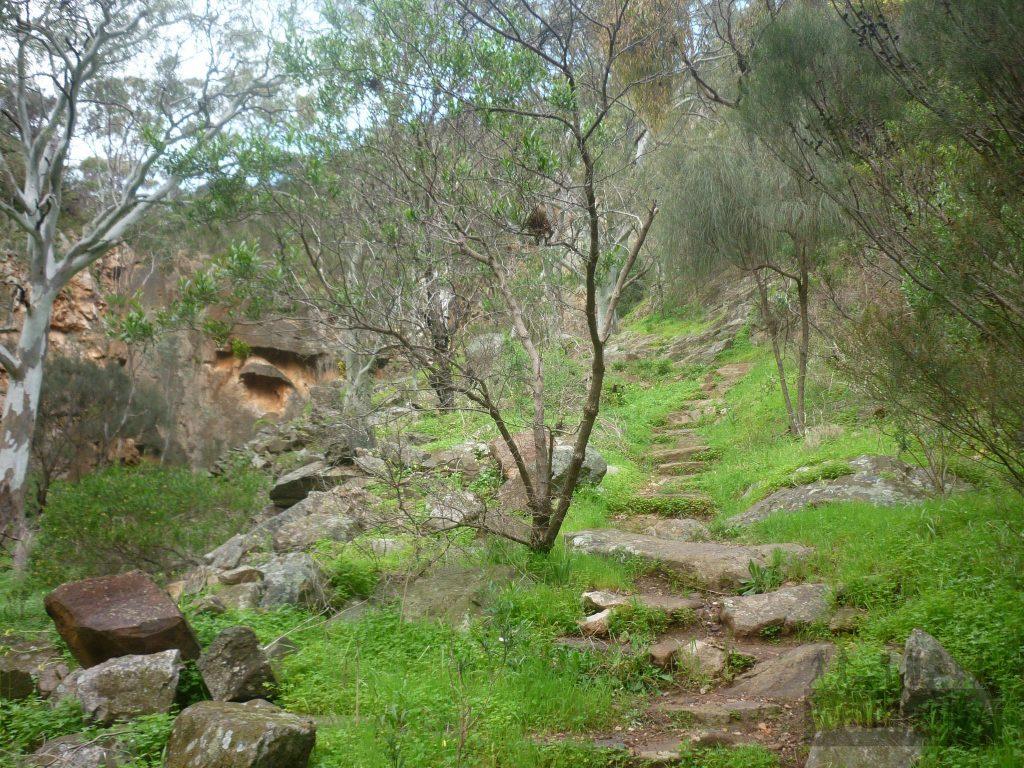 Ambers Gully Hike and Sugarloaves Trail