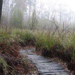 The Nature Trail, Mt Lofty Botanical Gardens