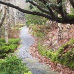 Rhododendron Trail, Mount Lofty Botanic Gardens