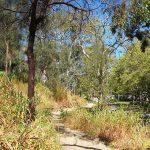 Wirraparinga Trail Loop, Brownhill Creek