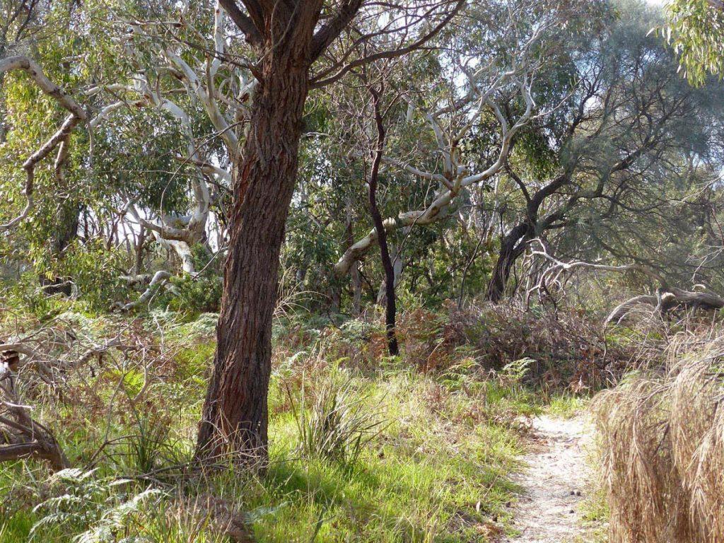 Coral Lichen Circuit, Aldinga Scrub Conservation Park