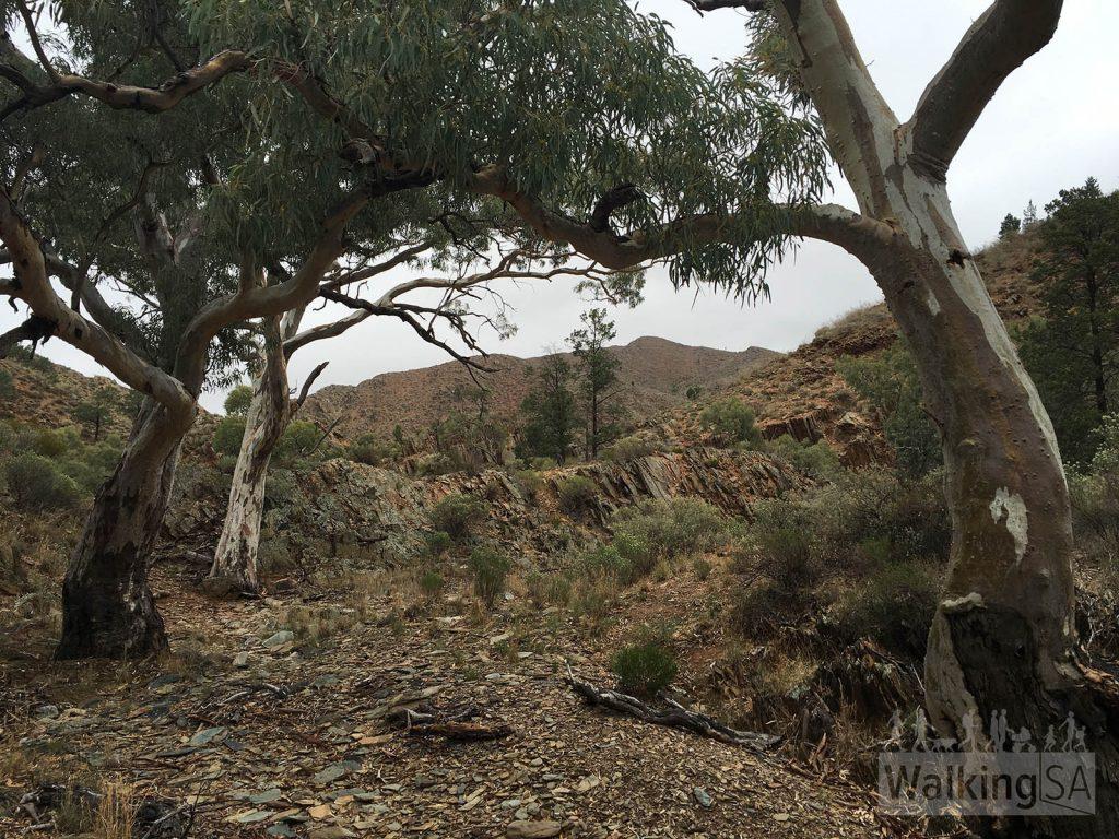 Bendleby Ranges – 4 Bushwalks