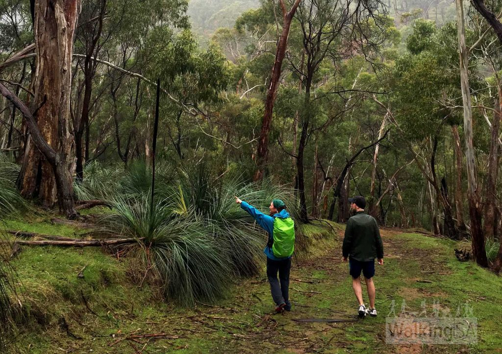 Montacute Conservation Park Hike
