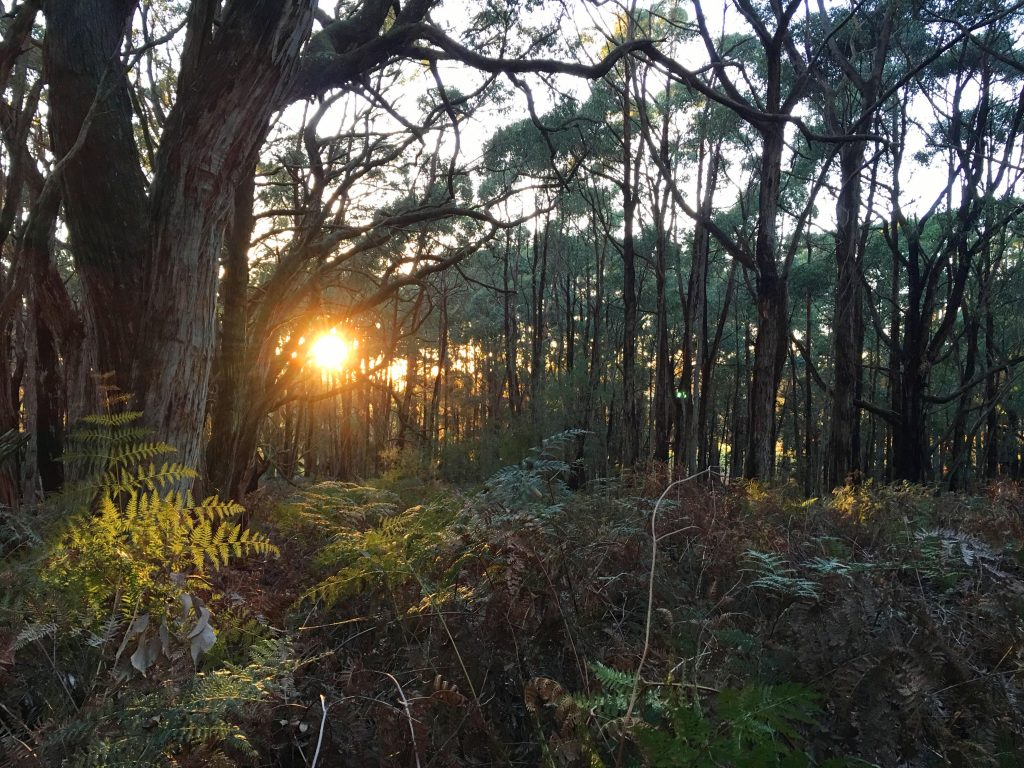 Forest Circuit Walk, Stringybark Campsite, Deep Creek