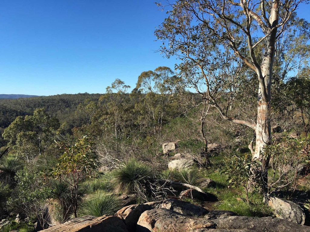 Devils Nose Hike via Lizard Rock and Hissey Trails, Para Wirra