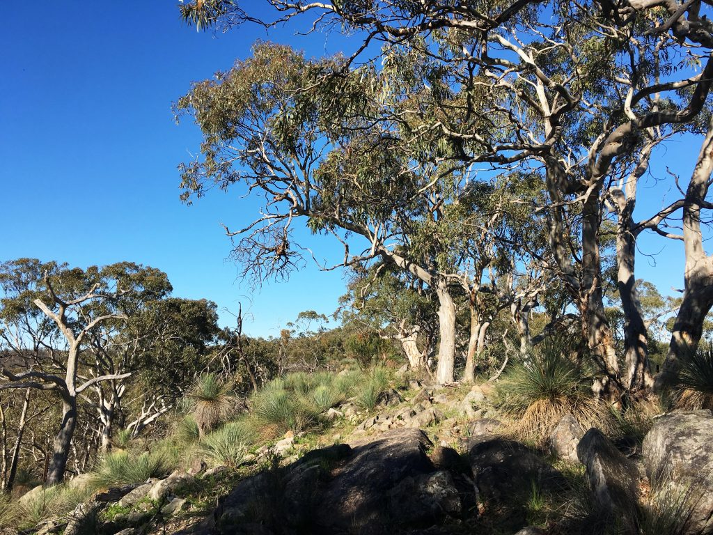 Devils Nose and Back Hike, Para Wirra