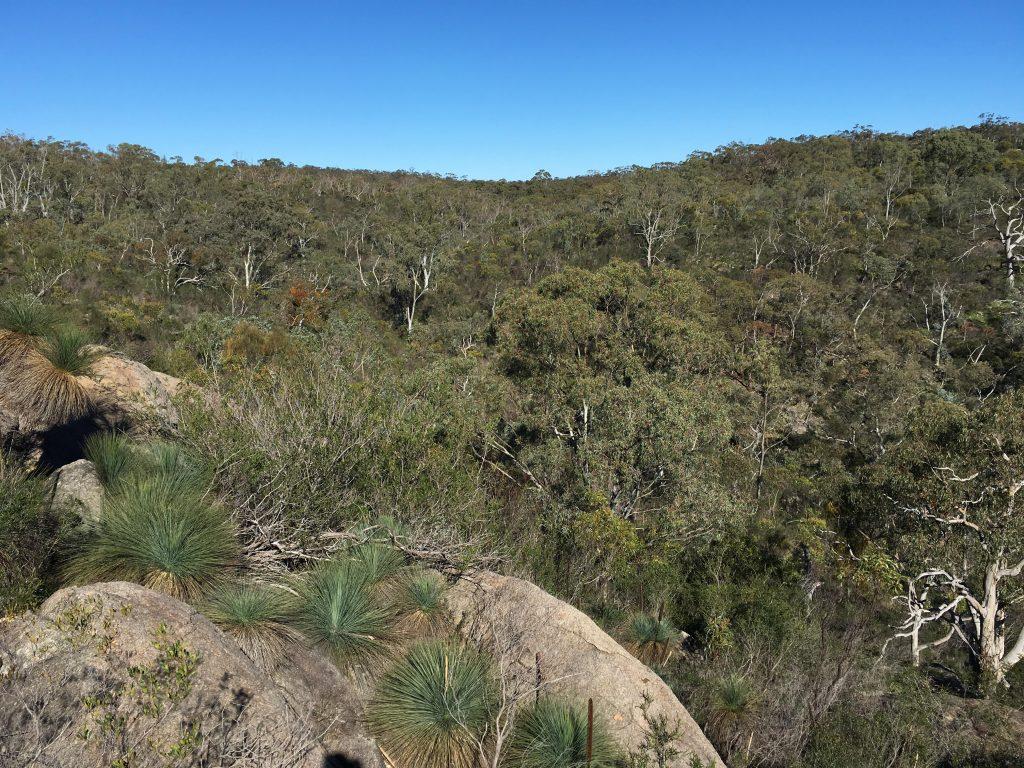 Lizard Rock Hike, Para Wirra