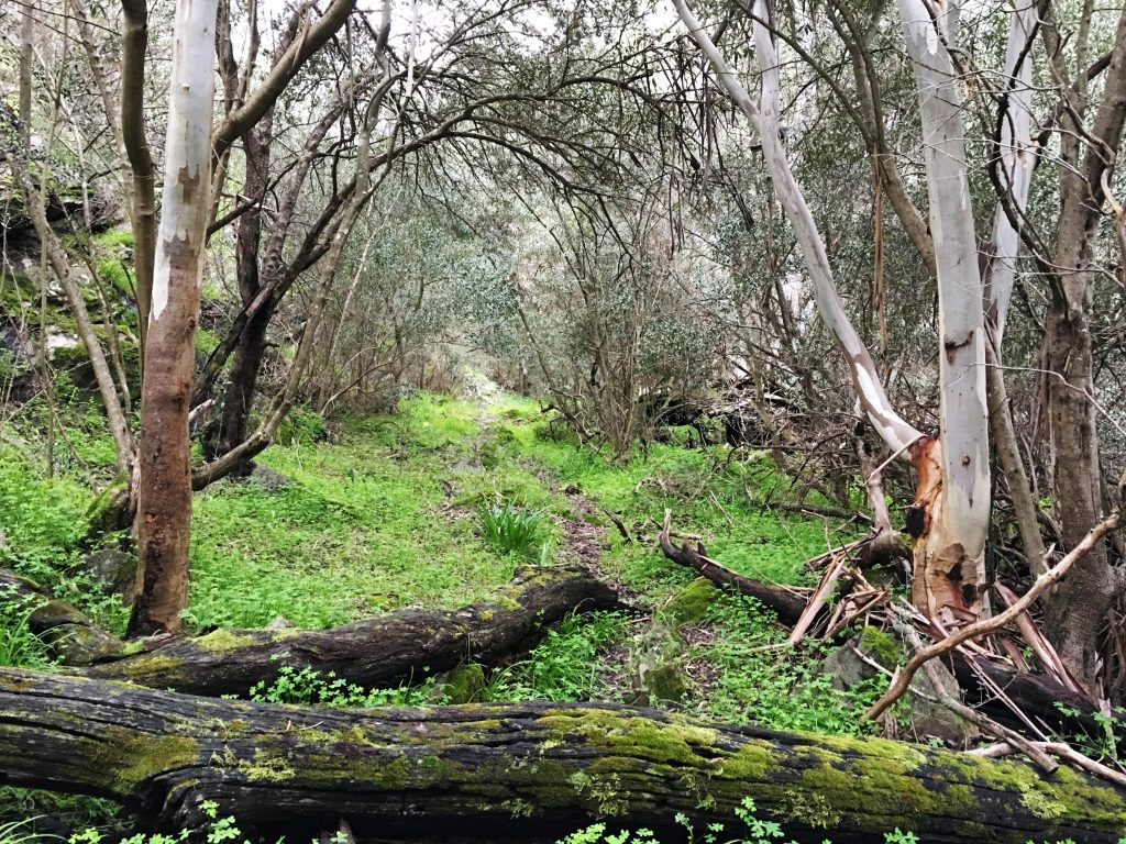 Tatendi Hike, Onkaparinga Gorge (3 Walk Options)