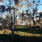 Jenkins Scrub Walking Trail