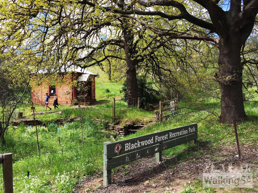 Blackwood Park: 20 Best Walks With Dogs In Adelaide