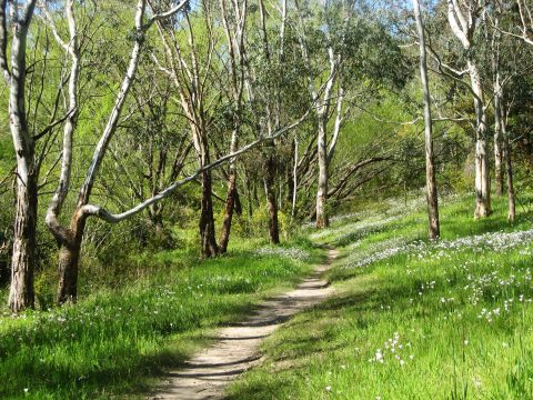 An essentially no-through stick-to-the-road creek walk is being expanded as a recreational and heritage trail into the extensive Springwood Park and linking walking routes with Brownhill Creek, the Yurebilla Trail and Carrick Hill. The land owner was conducive to making strategic parts of his property publicly accessible.