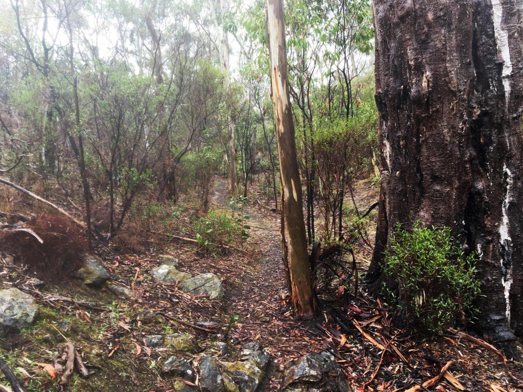 Mack Creek Hike, Para Wirra