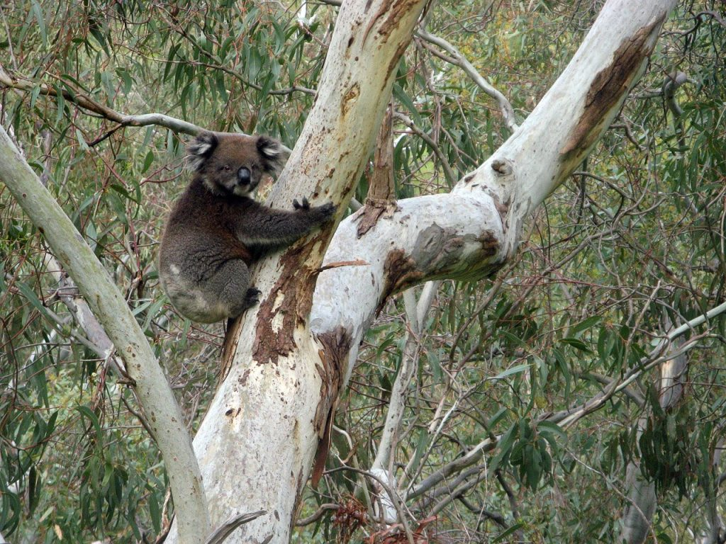 Section 1: Belair National Park to Eagle on the Hill, Yurrebilla Trail
