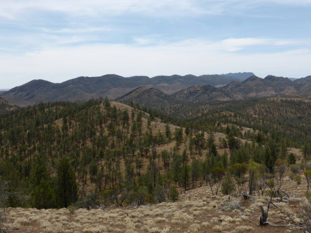Views from the lookout