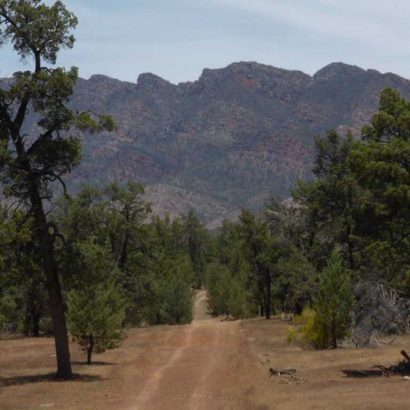 Bunyeroo and Wilcolo Creeks Hike