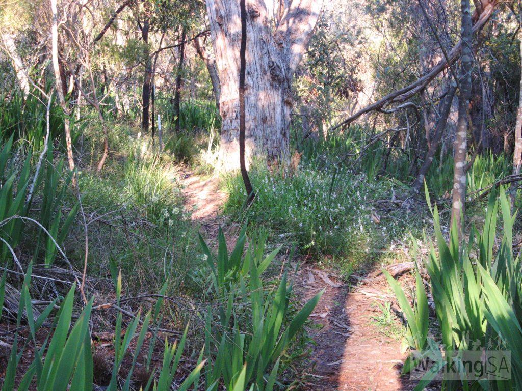Aldgate Valley Nature Walk