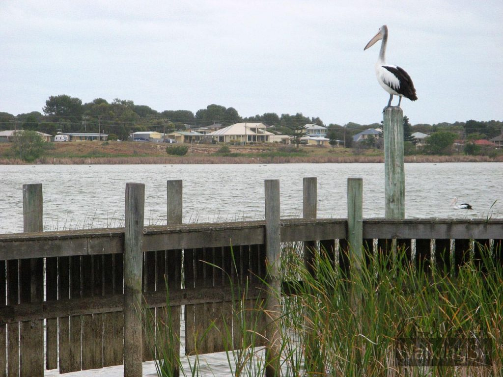 Murray River, Goolwa