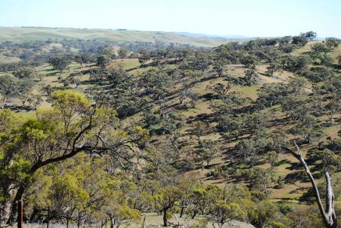 New section of the Lavendar Federation Trail from Truro to Eudunda