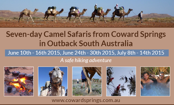 Coward Springs Camel Safaris