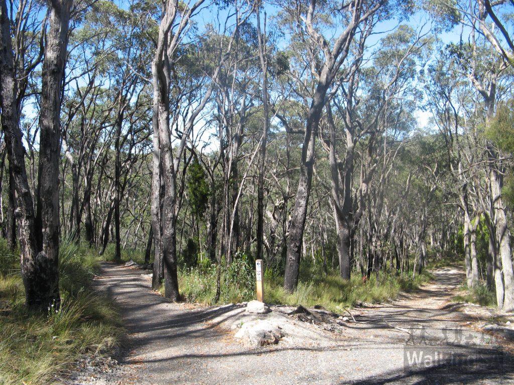 New trail meets Birree Fire Track