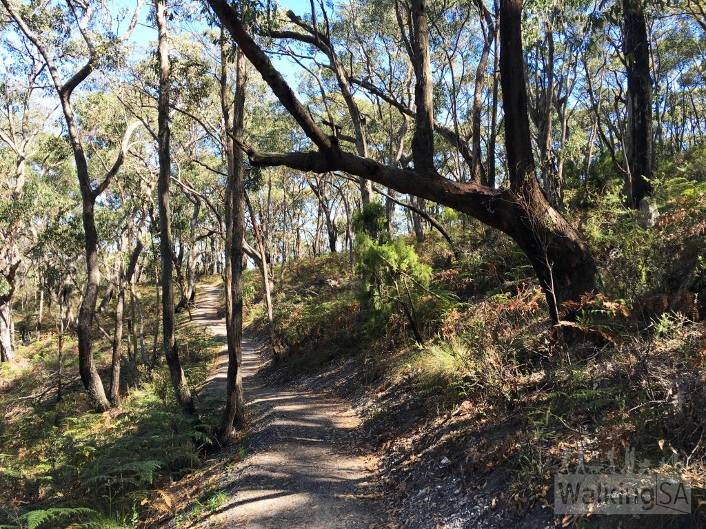 New trail constructed through Cleland Conservation Park (Feb 2016)