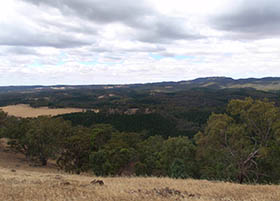 Mid North Forests Future Strategy