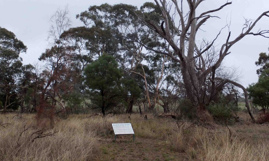 Site 19 : Keyneton Nature Reserve