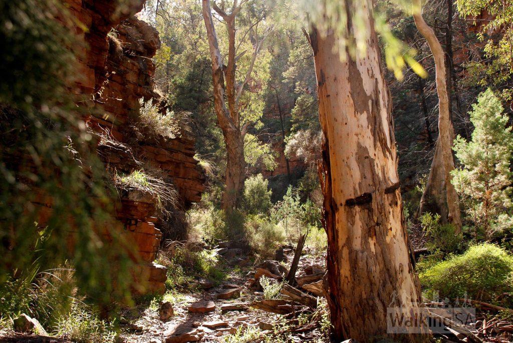 Hidden Gorge, on the Hidden Gorge Hike