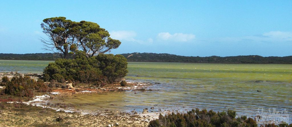 The Coorong waters