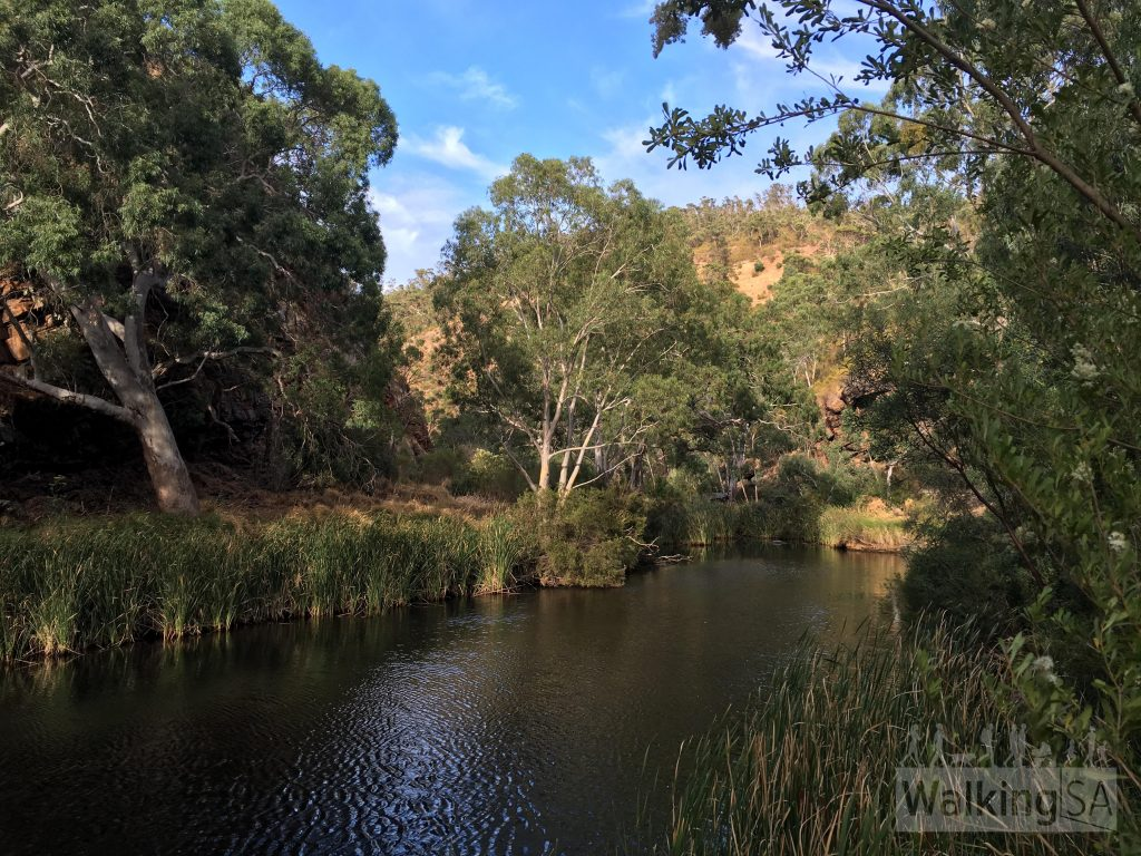 Waterhole on Onkaparinga River