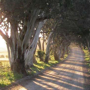 Keyneton Heritage Trail