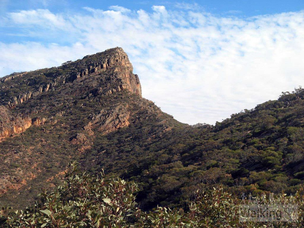 View of St Mary Peak and Tanderra Saddle