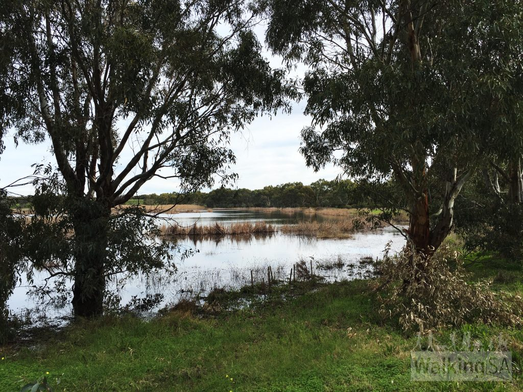Views over the Onkaparinga River wetlands on the Wetlands Loop Trail