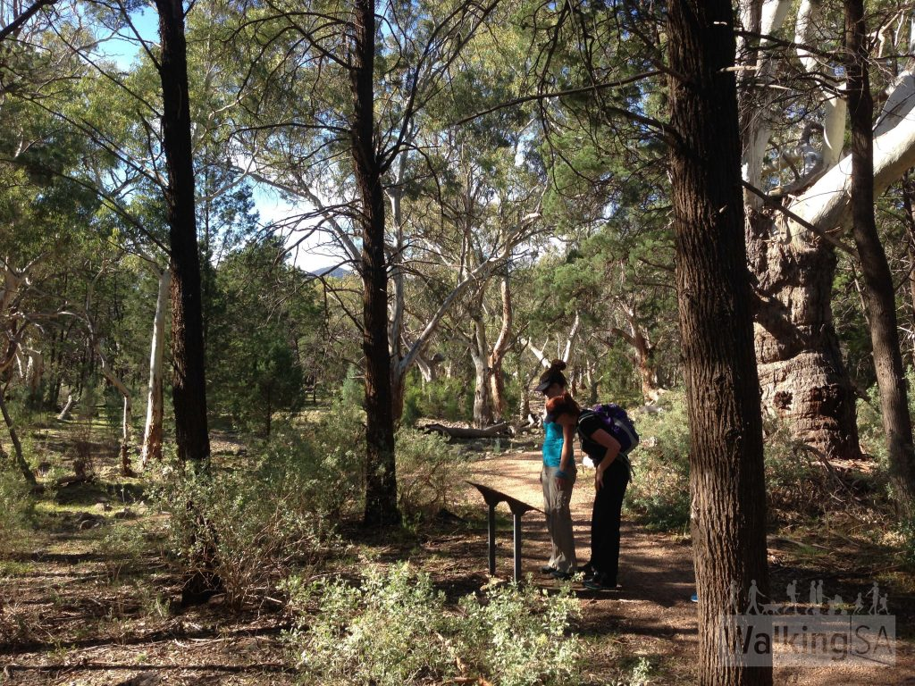 The path, Wirra Wirra Loop
