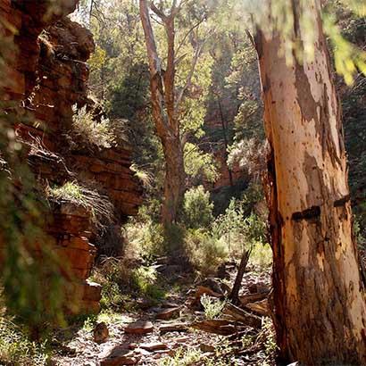 Hidden Gorge Hike, Mambray Creek