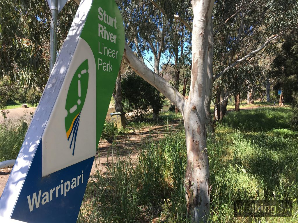 The Sturt River Linear Park passes through Warriparinga Wetlands.