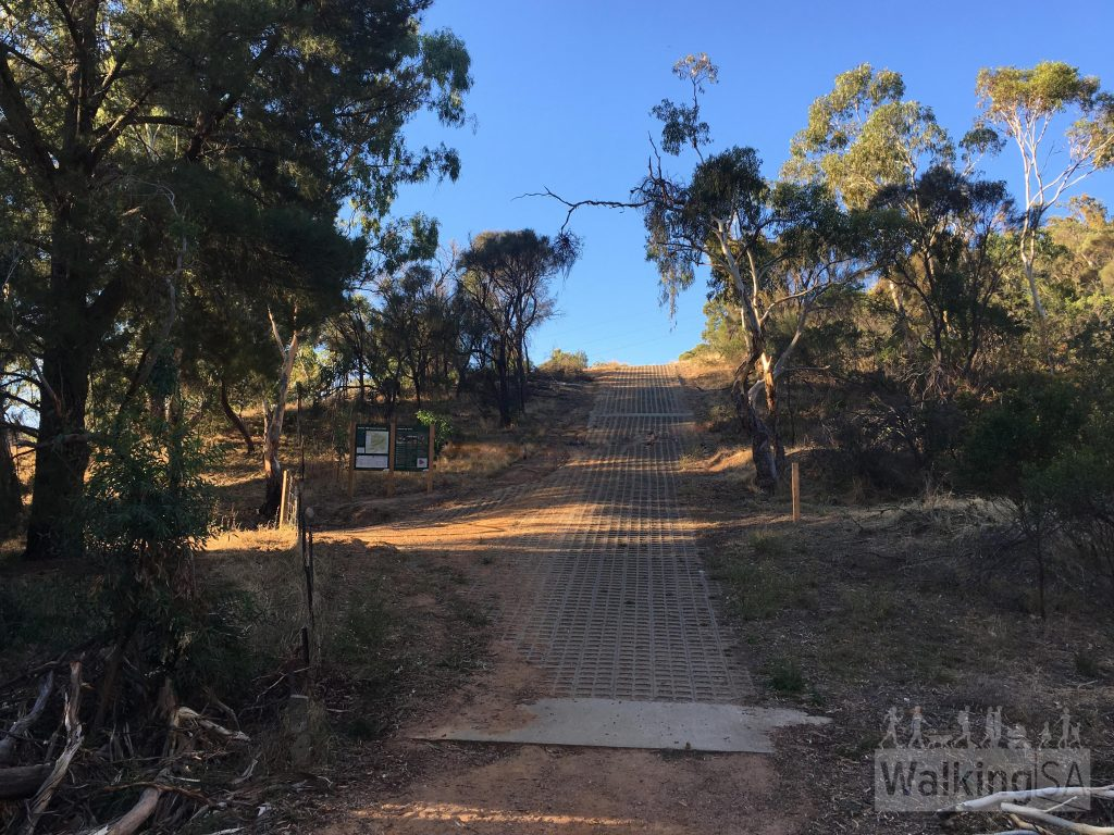 There are some steep hills on the Pink Gum Loop along the Boundary Track