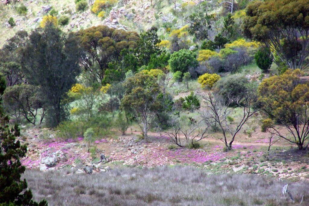 Rocky Gully near Monarto, 5km from the Murray Bridge trailhead
