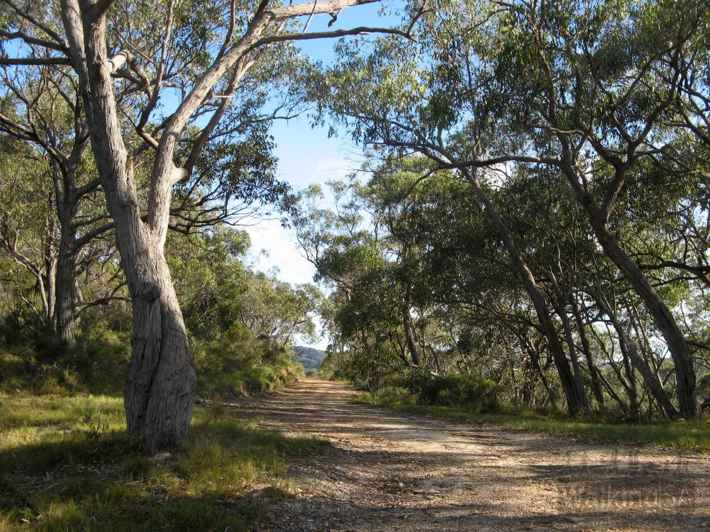 Walking the Cup Gum Track