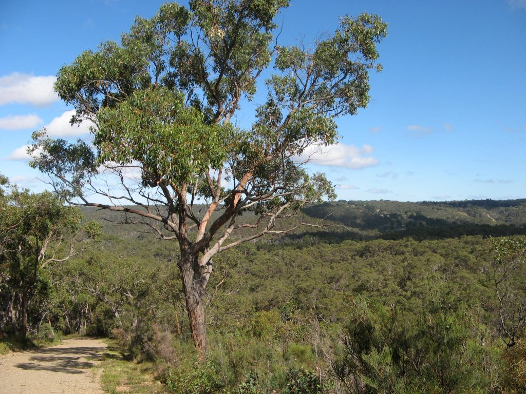 Views over the park, Stringyback Track