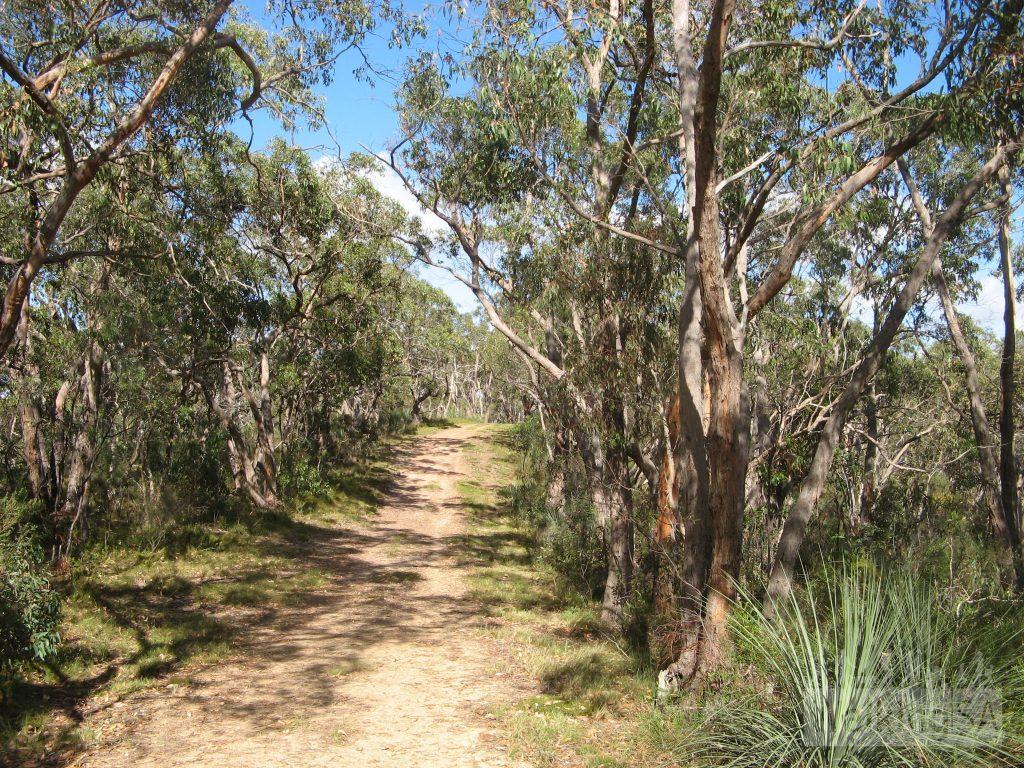Walking the Stringyback Track